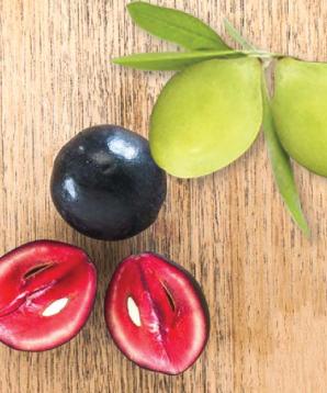 organic skin care ingredients