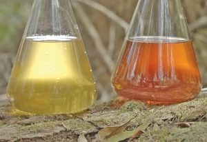 cellular extraction of native Australian extracts