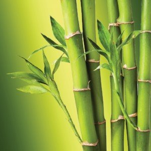 benefits of bamboo for skin care
