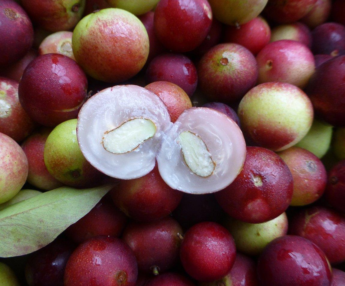 Camu Camu vitamin C skincare